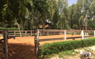 carrière poneys